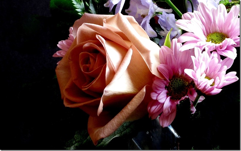 A Beautiful Rose and Company