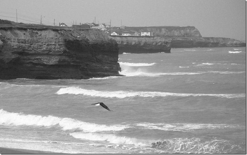 Cape Breton Eagle